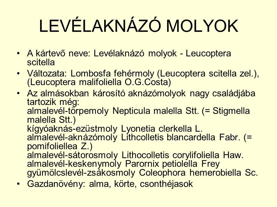 LEVÉLAKNÁZÓ MOLYOK A kártevő neve: Levélaknázó molyok - Leucoptera scitella Változata: Lombosfa fehérmoly (Leucoptera scitella zel.), (Leucoptera malifoliella O.G.Costa) Az almásokban károsító aknázómolyok nagy családjába tartozik még: almalevél-törpemoly Nepticula malella Stt.