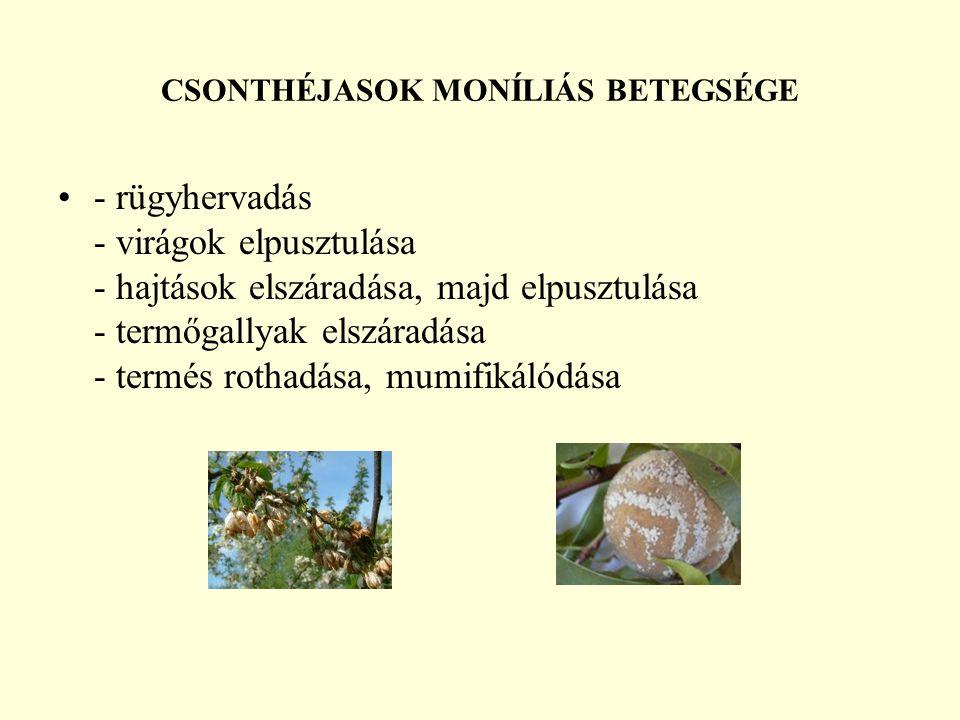 CSONTHÉJASOK MONÍLIÁS BETEGSÉGE - rügyhervadás - virágok elpusztulása - hajtások elszáradása, majd elpusztulása - termőgallyak elszáradása - termés rothadása, mumifikálódása