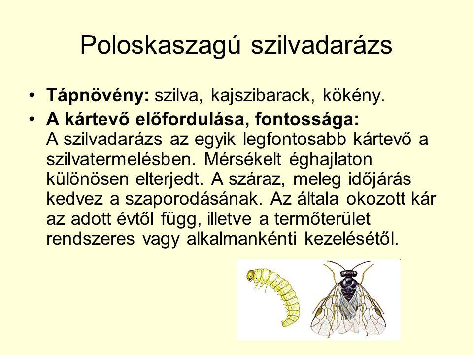 Poloskaszagú szilvadarázs Tápnövény: szilva, kajszibarack, kökény.
