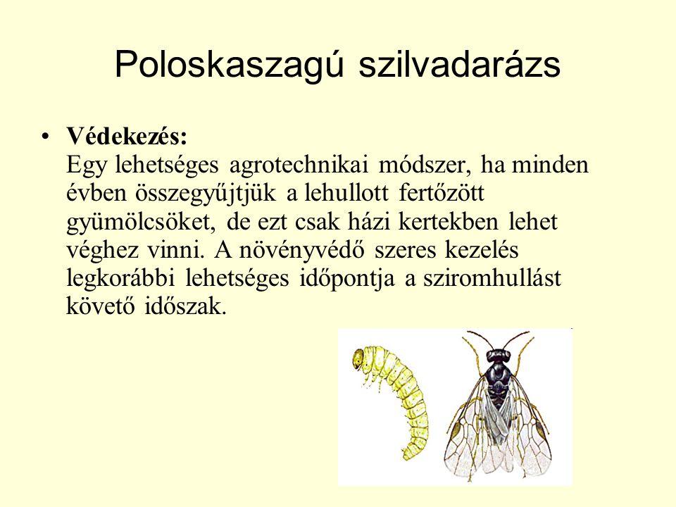 Poloskaszagú szilvadarázs Védekezés: Egy lehetséges agrotechnikai módszer, ha minden évben összegyűjtjük a lehullott fertőzött gyümölcsöket, de ezt csak házi kertekben lehet véghez vinni.
