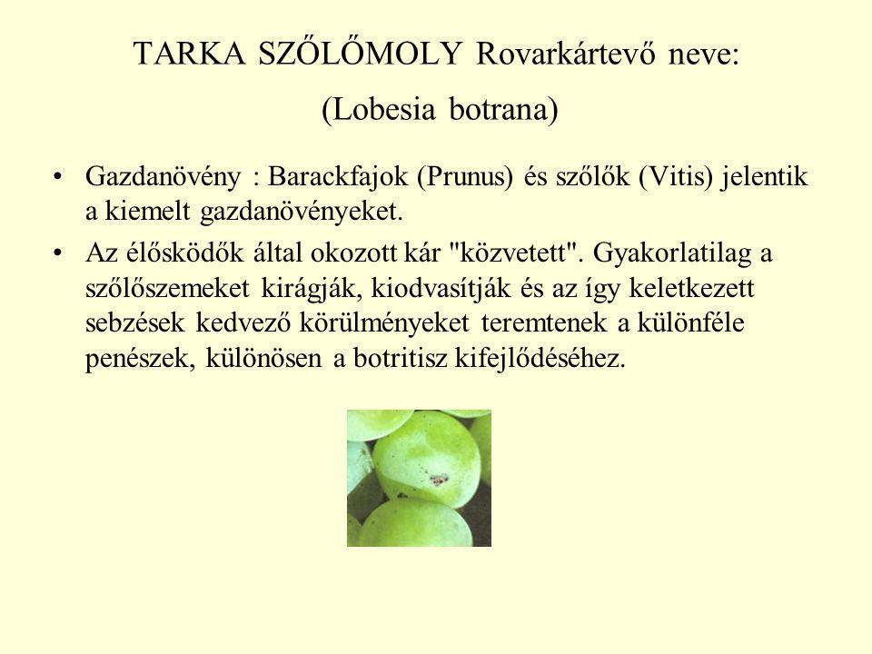 TARKA SZŐLŐMOLY Rovarkártevő neve: (Lobesia botrana) Gazdanövény : Barackfajok (Prunus) és szőlők (Vitis) jelentik a kiemelt gazdanövényeket.