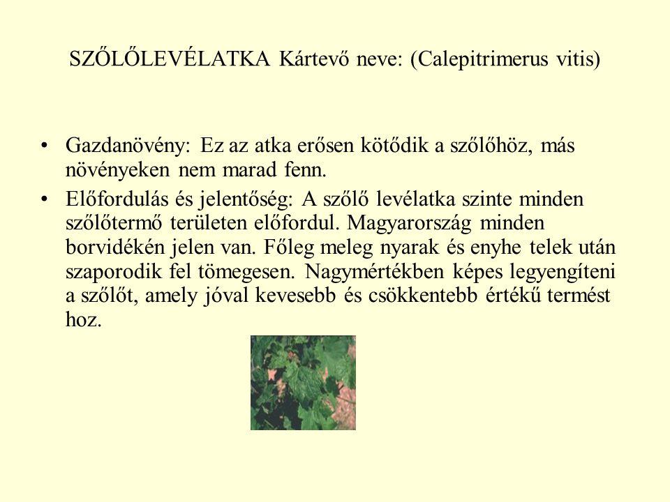 SZŐLŐLEVÉLATKA Kártevő neve: (Calepitrimerus vitis) Gazdanövény: Ez az atka erősen kötődik a szőlőhöz, más növényeken nem marad fenn.