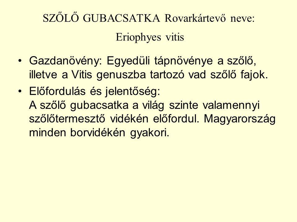 SZŐLŐ GUBACSATKA Rovarkártevő neve: Eriophyes vitis Gazdanövény: Egyedüli tápnövénye a szőlő, illetve a Vitis genuszba tartozó vad szőlő fajok.