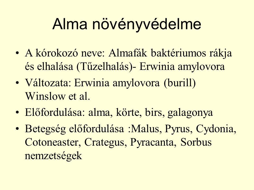 A kórokozó neve: Almafák baktériumos rákja és elhalása (Tűzelhalás)- Erwinia amylovora Változata: Erwinia amylovora (burill) Winslow et al.