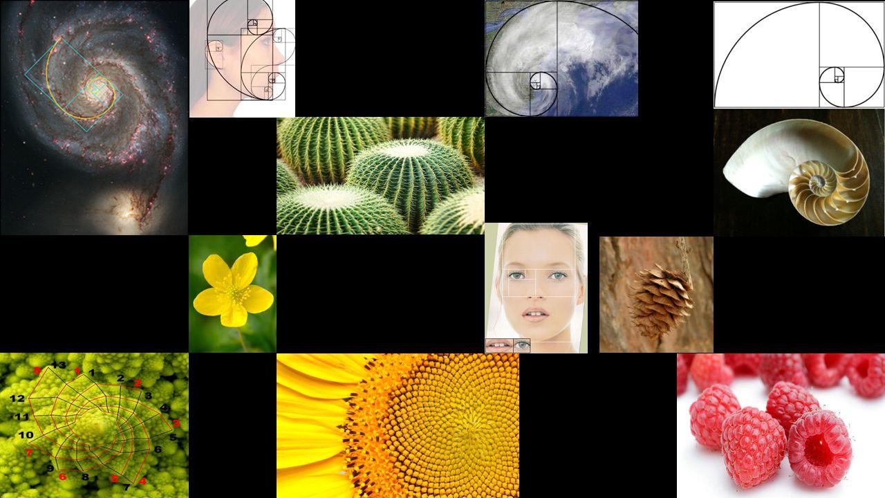 A Fibonacci sorozat a művészetekben is gyakran előkerül, a zenében, festészetben, szobrászatban.