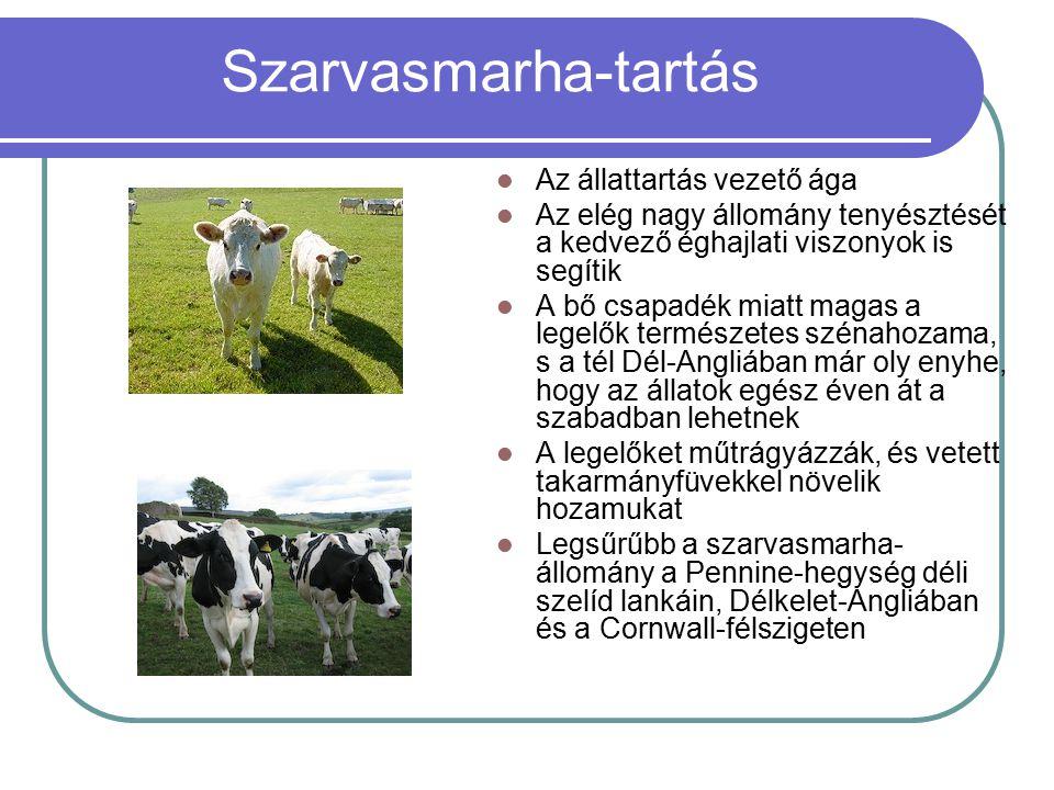 Szarvasmarha-tartás Az állattartás vezető ága Az elég nagy állomány tenyésztését a kedvező éghajlati viszonyok is segítik A bő csapadék miatt magas a