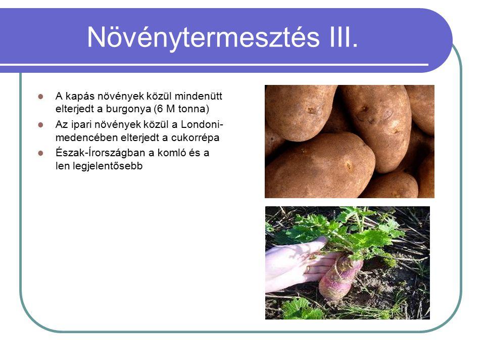 Növénytermesztés III. A kapás növények közül mindenütt elterjedt a burgonya (6 M tonna) Az ipari növények közül a Londoni- medencében elterjedt a cuko