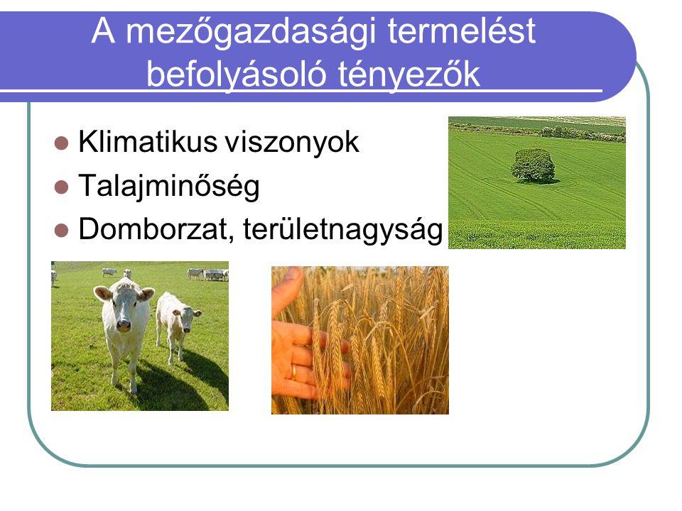 A mezőgazdasági termelést befolyásoló tényezők Klimatikus viszonyok Talajminőség Domborzat, területnagyság