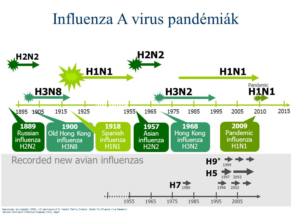 H7 H5 H9 * 1980 1997 Recorded new avian influenzas 19962002 1999 2003 195519651975198519952005 H1N1 H2N2 1889 Russian influenza H2N2 1957 Asian influe
