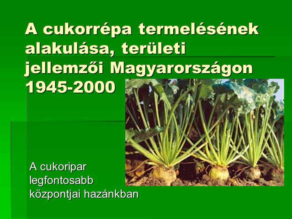 A cukorrépa termelésének alakulása, területi jellemzői Magyarországon 1945-2000 A cukoripar legfontosabb központjai hazánkban
