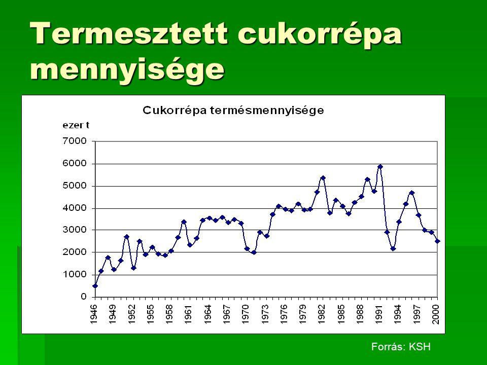 Termesztett cukorrépa mennyisége Forrás: KSH