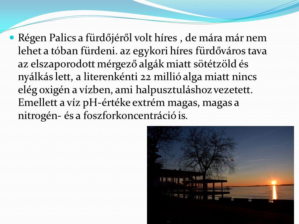 Régen Palics a fürdőjéről volt híres, de mára már nem lehet a tóban fürdeni. az egykori híres fürdőváros tava az elszaporodott mérgező algák miatt söt