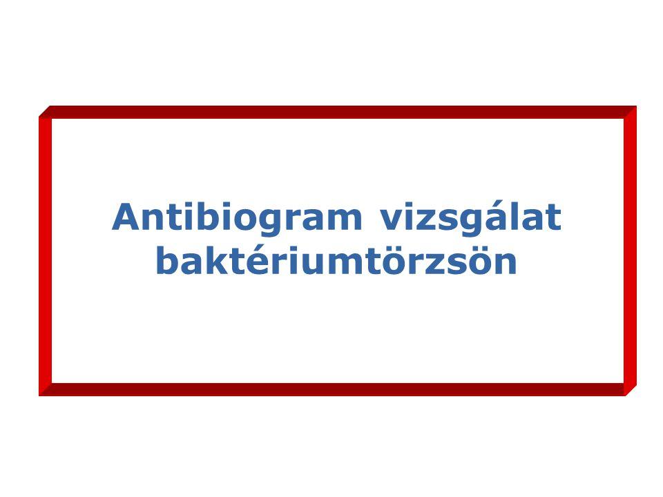 Antibiogram vizsgálat baktériumtörzsön