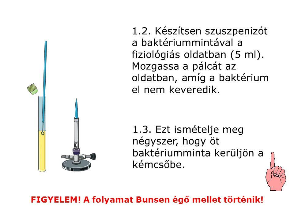 1.2. Készítsen szuszpenizót a baktériummintával a fiziológiás oldatban (5 ml). Mozgassa a pálcát az oldatban, amíg a baktérium el nem keveredik. FIGYE