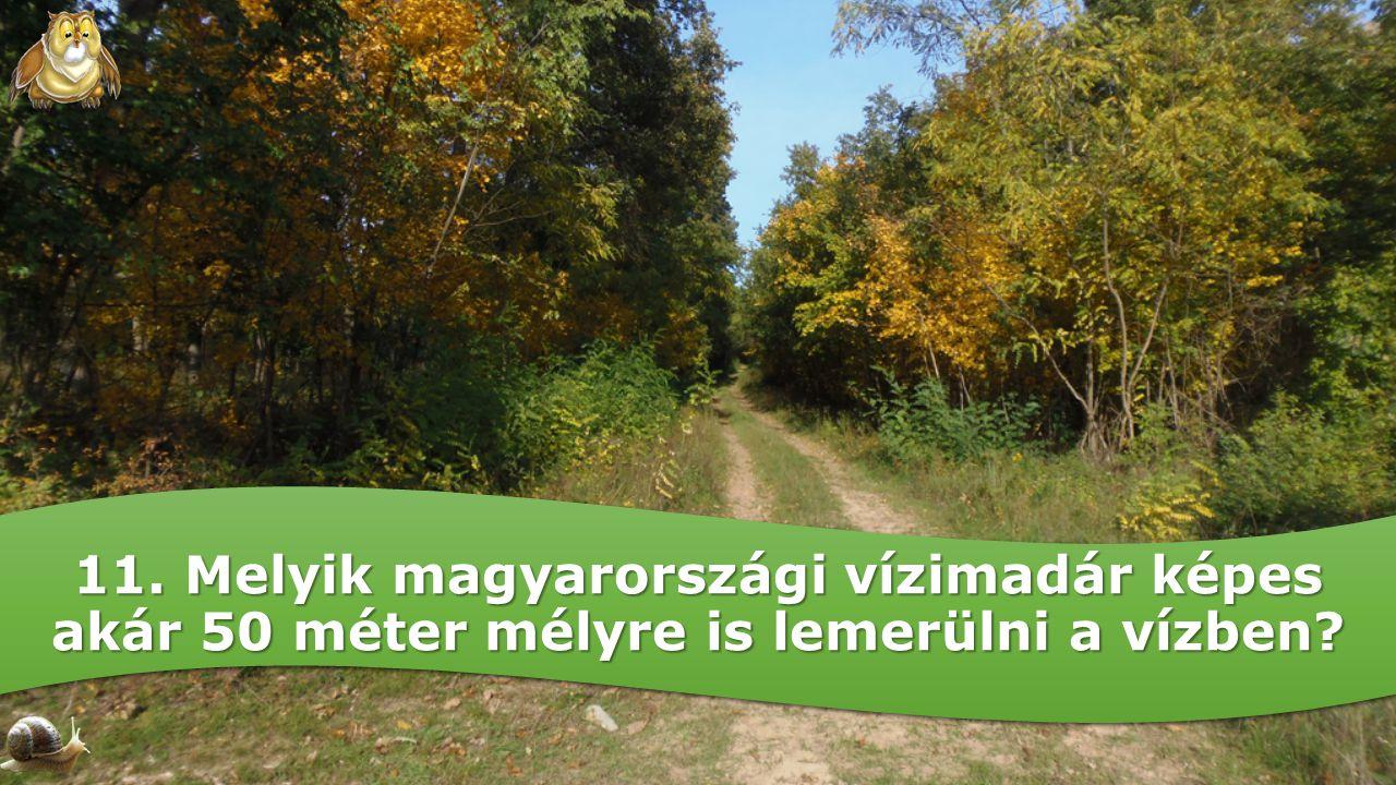 11. Melyik magyarországi vízimadár képes akár 50 méter mélyre is lemerülni a vízben?