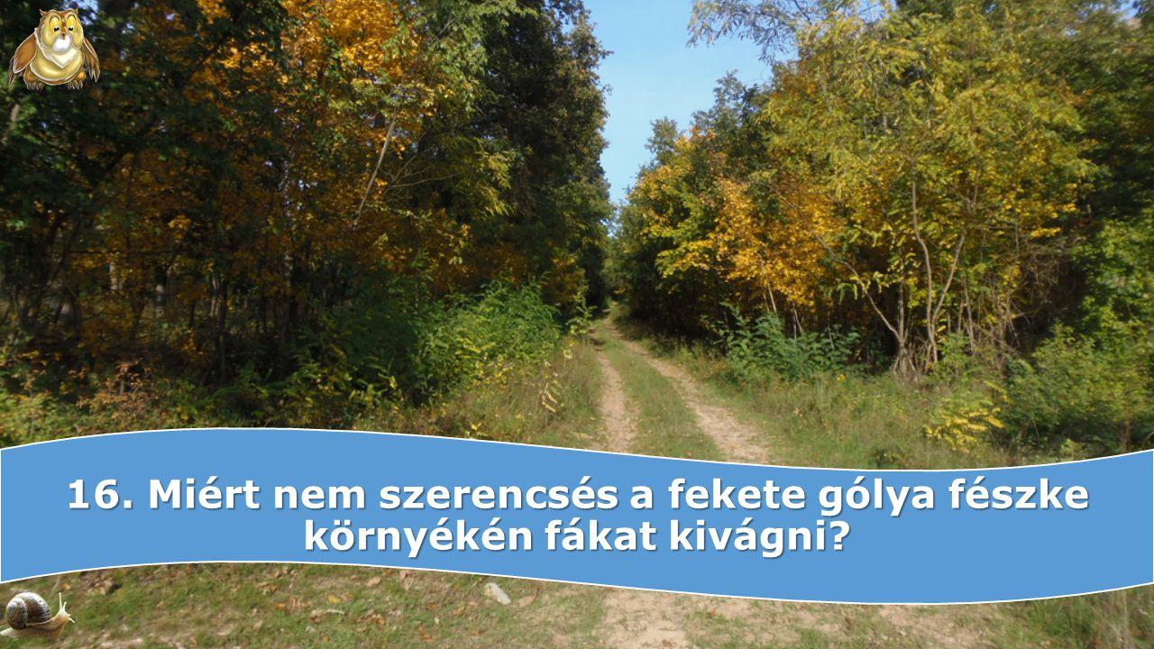 16. Miért nem szerencsés a fekete gólya fészke környékén fákat kivágni?