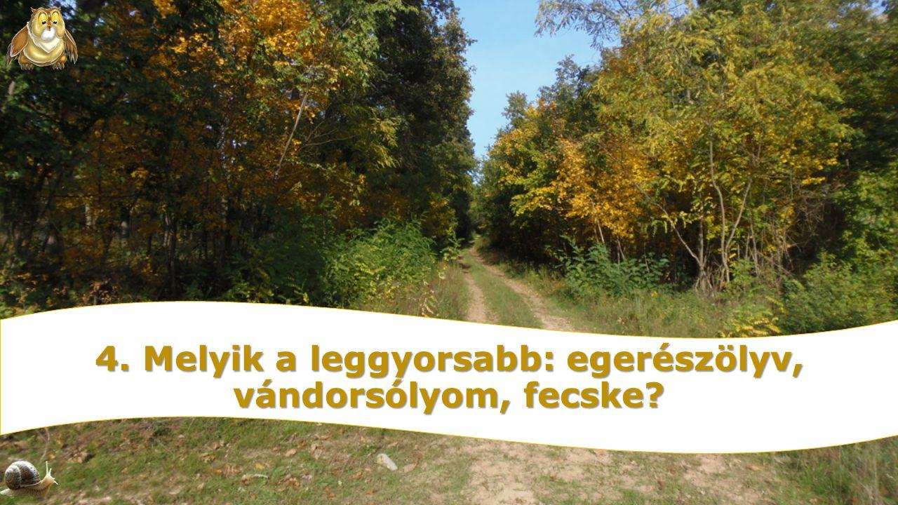 4. Melyik a leggyorsabb: egerészölyv, vándorsólyom, fecske?