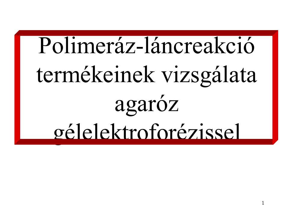 1 Polimeráz-láncreakció termékeinek vizsgálata agaróz gélelektroforézissel