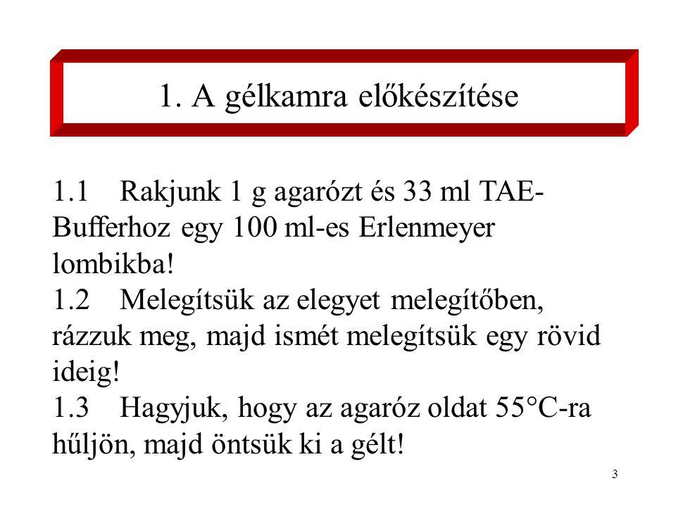 3 1.1 Rakjunk 1 g agarózt és 33 ml TAE- Bufferhoz egy 100 ml-es Erlenmeyer lombikba.