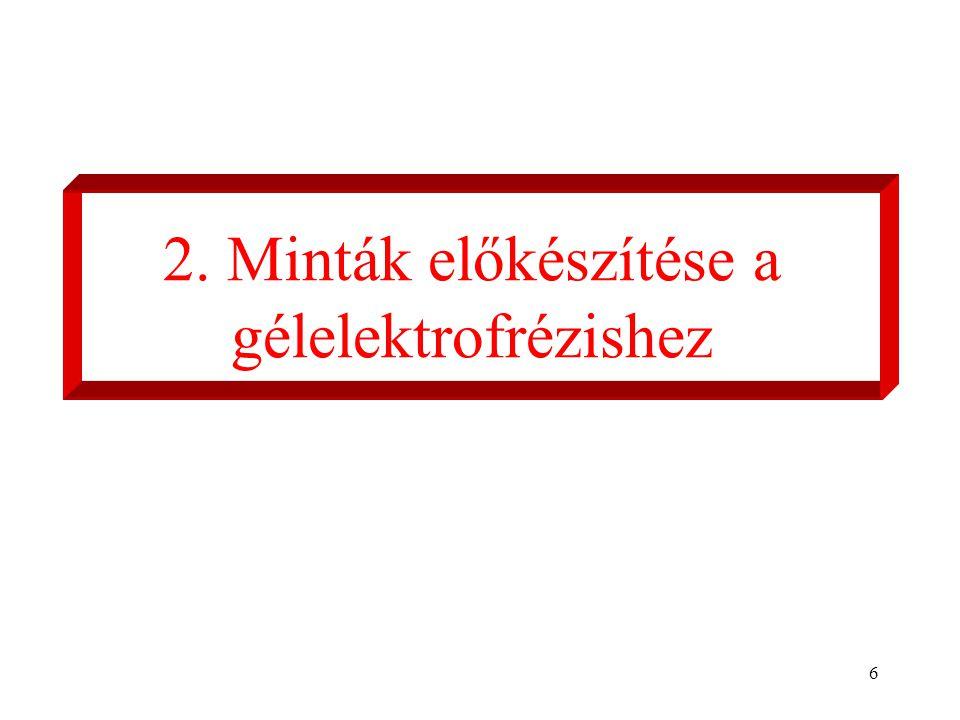 6 2. Minták előkészítése a gélelektrofrézishez