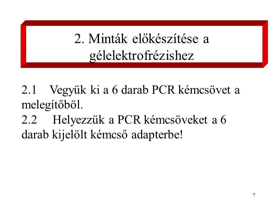 7 2.1Vegyük ki a 6 darab PCR kémcsövet a melegítőböl.