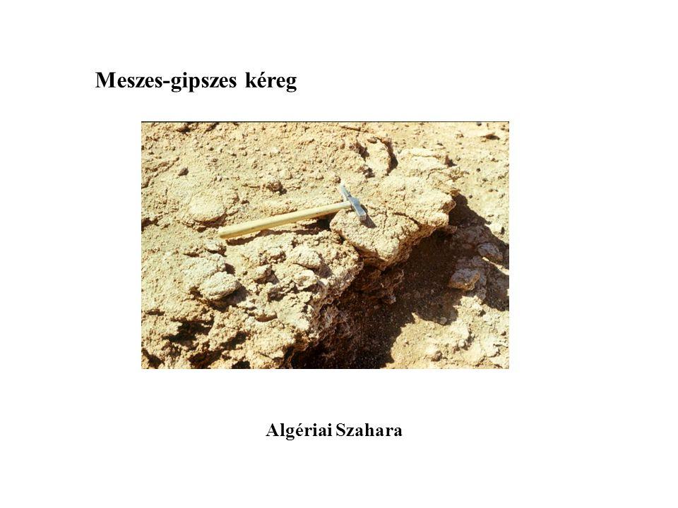 Meszes-gipszes kéreg Algériai Szahara