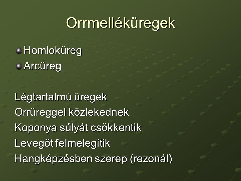 Orrmelléküregek HomloküregArcüreg Légtartalmú üregek Orrüreggel közlekednek Koponya súlyát csökkentik Levegőt felmelegítik Hangképzésben szerep (rezonál)