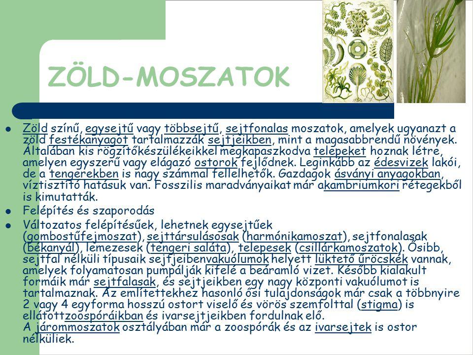 ZÖLD-MOSZATOK Zöld színű, egysejtű vagy többsejtű, sejtfonalas moszatok, amelyek ugyanazt a zöld festékanyagot tartalmazzák sejtjeikben, mint a magasa