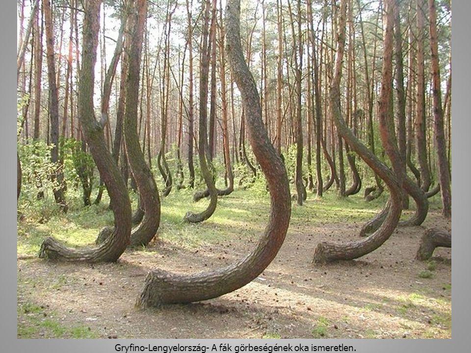 Gryfino-Lengyelország- A fák görbeségének oka ismeretlen. 