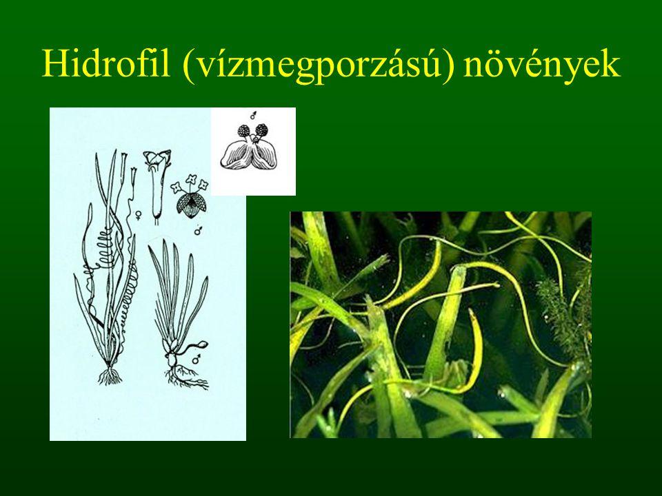 Hidrofil (vízmegporzású) növények