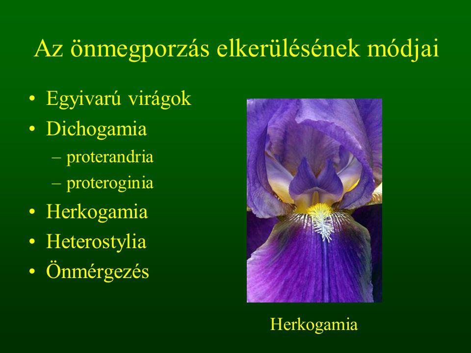 Az önmegporzás elkerülésének módjai Egyivarú virágok Dichogamia –proterandria –proteroginia Herkogamia Heterostylia Önmérgezés Herkogamia