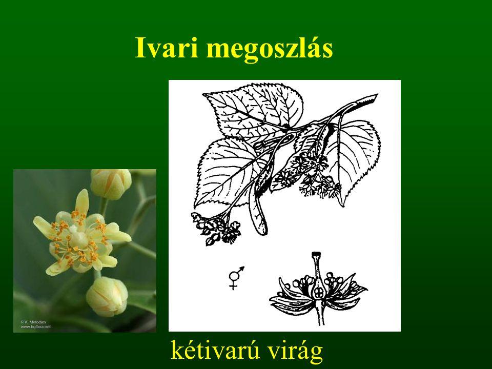 kétivarú virág Ivari megoszlás