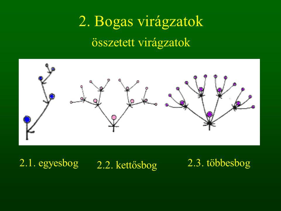 2. Bogas virágzatok összetett virágzatok 2.1. egyesbog 2.2. kettősbog 2.3. többesbog