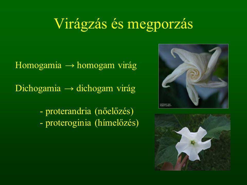 Virágzás és megporzás Homogamia → homogam virág Dichogamia → dichogam virág - proterandria (nőelőzés) - proteroginia (hímelőzés)
