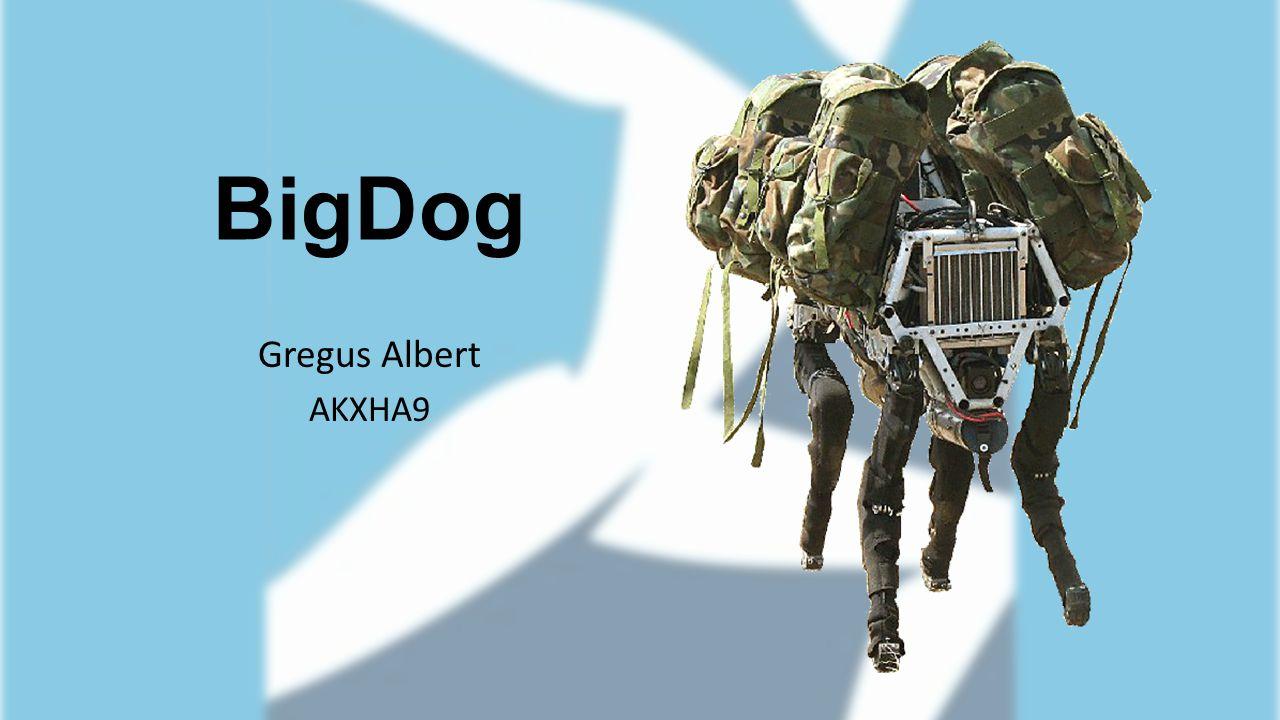 BigDog Gregus Albert AKXHA9