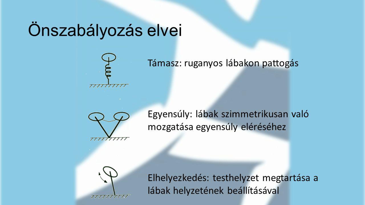 Önszabályozás elvei Támasz: ruganyos lábakon pattogás Egyensúly: lábak szimmetrikusan való mozgatása egyensúly eléréséhez Elhelyezkedés: testhelyzet m
