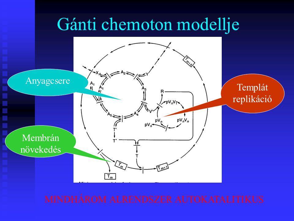 Gánti chemoton modellje MINDHÁROM ALRENDSZER AUTOKATALITIKUS Templát replikáció Anyagcsere Membrán növekedés
