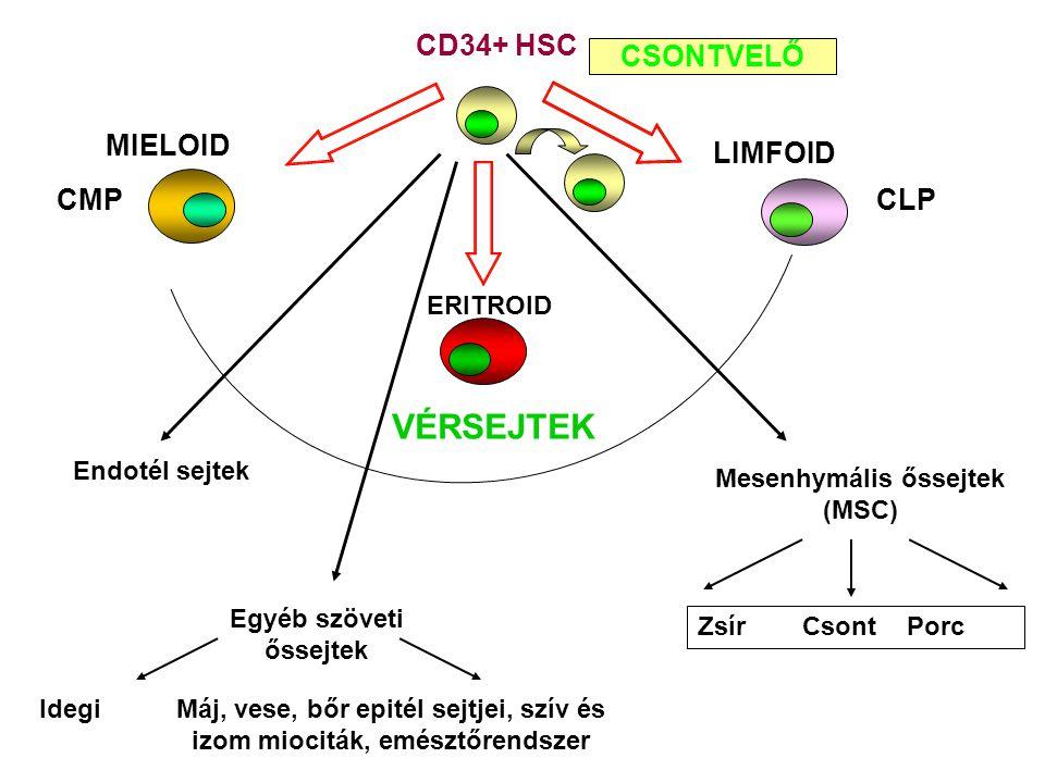 MIELOID LIMFOID CSONTVELŐ CMPCLP CD34+ HSC ERITROID VÉRSEJTEK Endotél sejtek Mesenhymális őssejtek (MSC) ZsírCsontPorc Egyéb szöveti őssejtek IdegiMáj, vese, bőr epitél sejtjei, szív és izom miociták, emésztőrendszer