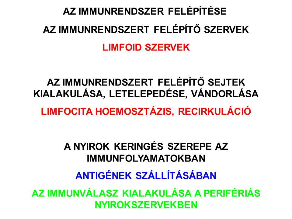 AZ IMMUNRENDSZER SZERVEZŐDÉSE A LIMFOCITÁK SPECIÁLIS SZERVEKBEN TÖMÖRÜLNEK KÖZPONTI (ELSŐDLEGES) LIMFOID SZERVEK –Csontvelő –Tímusz DIFFERENCIÁLÓDÁS AZ ANTIGÉNFELISMERŐ FUNKCIÓIG PERIFÉRIÁS (MÁSODLAGOS) LIMFOID SZERVEK –Környezeti hatások –Veszély jelek és antigének