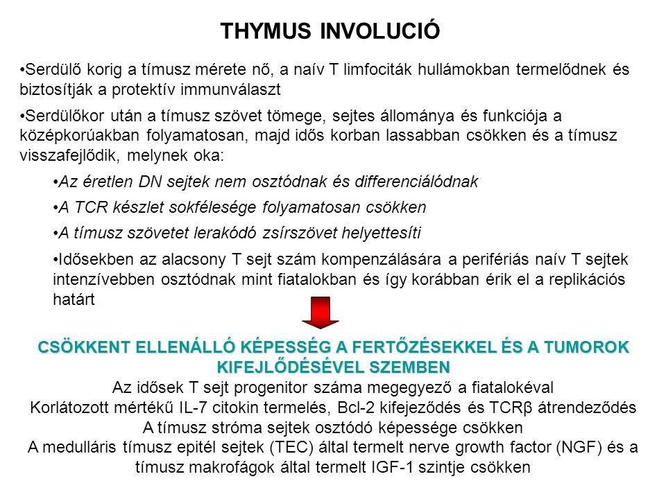 THYMUS INVOLUCIÓ Serdülő korig a tímusz mérete nő, a naív T limfociták hullámokban termelődnek és biztosítják a protektív immunválaszt Serdülőkor után a tímusz szövet tömege, sejtes állománya és funkciója a középkorúakban folyamatosan, majd idős korban lassabban csökken és a tímusz visszafejlődik, melynek oka: Az éretlen DN sejtek nem osztódnak és differenciálódnak A TCR készlet sokfélesége folyamatosan csökken A tímusz szövetet lerakódó zsírszövet helyettesíti Idősekben az alacsony T sejt szám kompenzálására a perifériás naív T sejtek intenzívebben osztódnak mint fiatalokban és így korábban érik el a replikációs határt CSÖKKENT ELLENÁLLÓ KÉPESSÉG A FERTŐZÉSEKKEL ÉS A TUMOROK KIFEJLŐDÉSÉVEL SZEMBEN Az idősek T sejt progenitor száma megegyező a fiatalokéval Korlátozott mértékű IL-7 citokin termelés, Bcl-2 kifejeződés és TCRβ átrendeződés A tímusz stróma sejtek osztódó képessége csökken A medulláris tímusz epitél sejtek (TEC) által termelt nerve growth factor (NGF) és a tímusz makrofágok által termelt IGF-1 szintje csökken