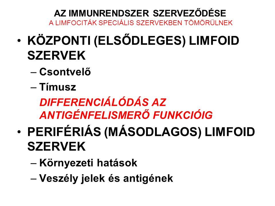 Kórokozók Allergének Antigének Őssejtek B-limfociták Ellenanyagok T-limfociták Sejtes immunválasz Segítő Th Ölő Tc Vérkeringés Nyirok keringés Csontvelő Tímusz Nyirokerek KÖZPONTI ELSŐDLEGES NYIROKSZERVEK Nyirokerek PERIFÉRIÁS MÁSODLAGOS NYIROKSZERVEK Lép Nyirokcsomók Waldeyer gyűrű WALDEYER GYŰRŰ Mandulák, (tonsilla, orr, garat, nyelvgyöki)