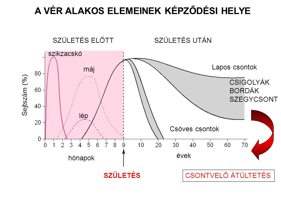 Biomechanikai terhelés HEMATOPOETIKUS SEJTEK KIALAKULÁSA Vérsejt AORTA HSC AZ EREK ÉS A HEMATOPOETIKUS SEJTEK (HSC) KAPCSOLT FEJLŐDÉSE Adamo et al., Nature 2009, North TE, et al.