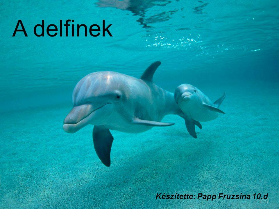 A delfinek Készítette: Papp Fruzsina 10.d