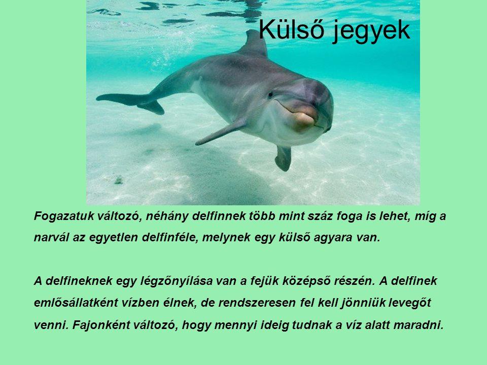Kommunikáció A delfinek hangjának frekvenciája az ultrahang tartományba esik,,neveket használnak bemutatkozásra, és egymás azonosítására: víz alatti füttyjeleikben mindegyikük egy- egy egyéni, jellegzetes sorozatot használ