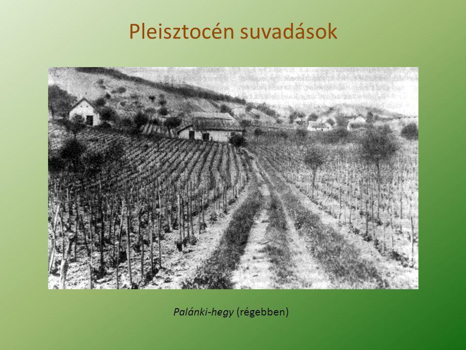 Pleisztocén suvadások Palánki-hegy (napjainkban)