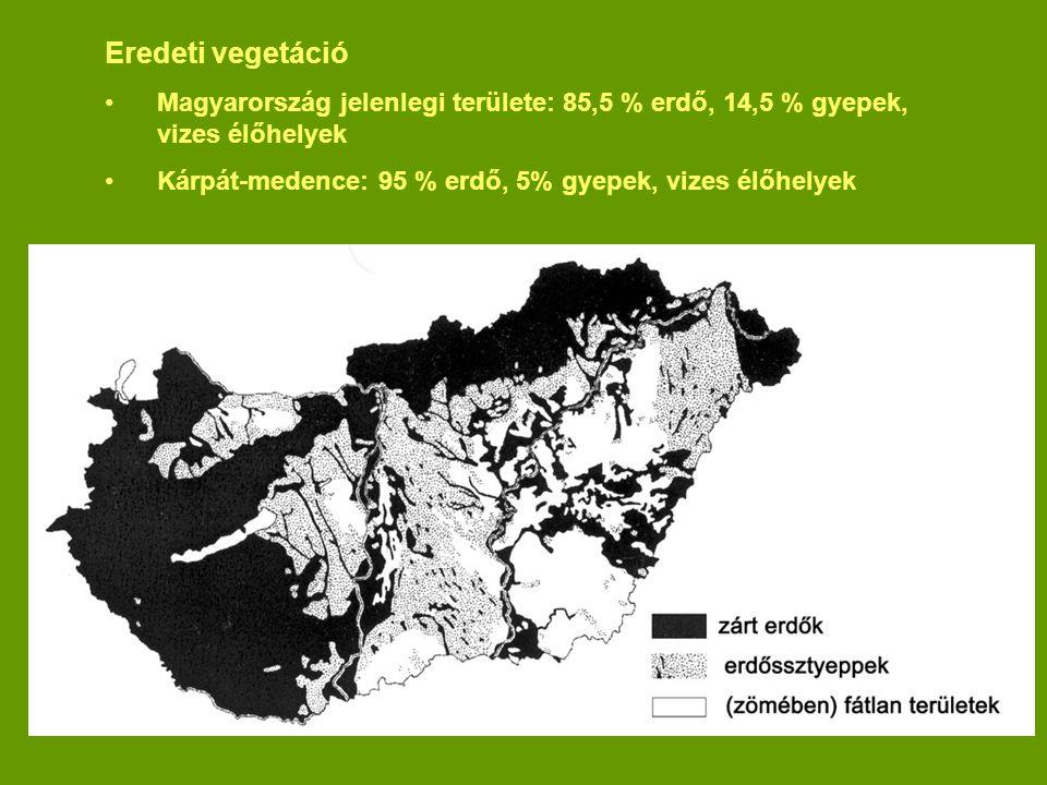 Eredeti vegetáció Magyarország jelenlegi területe: 85,5 % erdő, 14,5 % gyepek, vizes élőhelyek Kárpát-medence: 95 % erdő, 5% gyepek, vizes élőhelyek