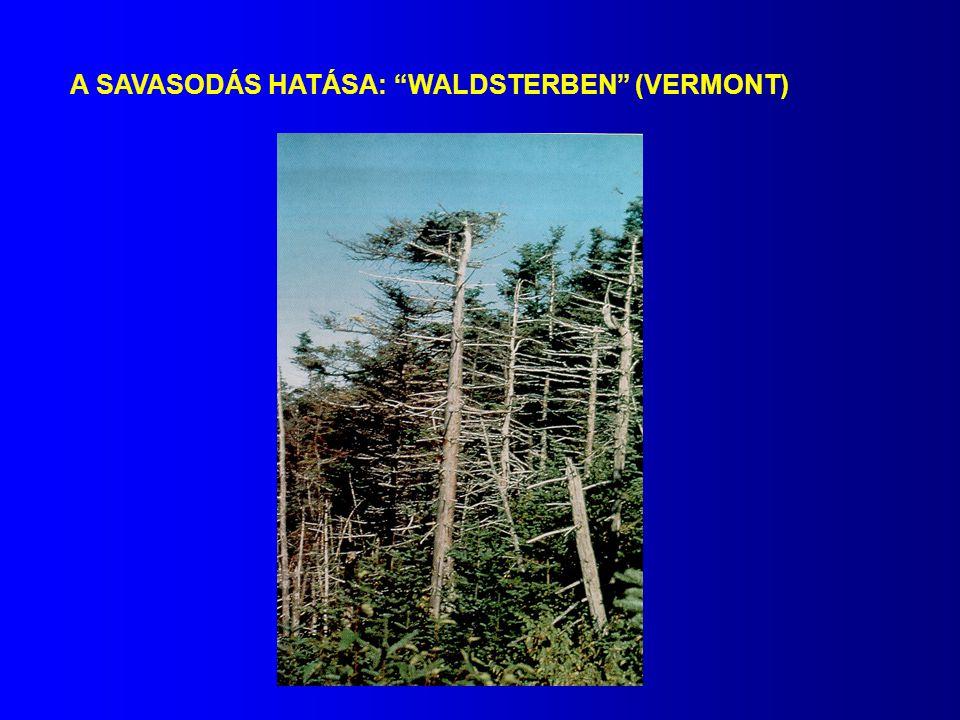 """A SAVASODÁS HATÁSA: """"WALDSTERBEN"""" (VERMONT)"""