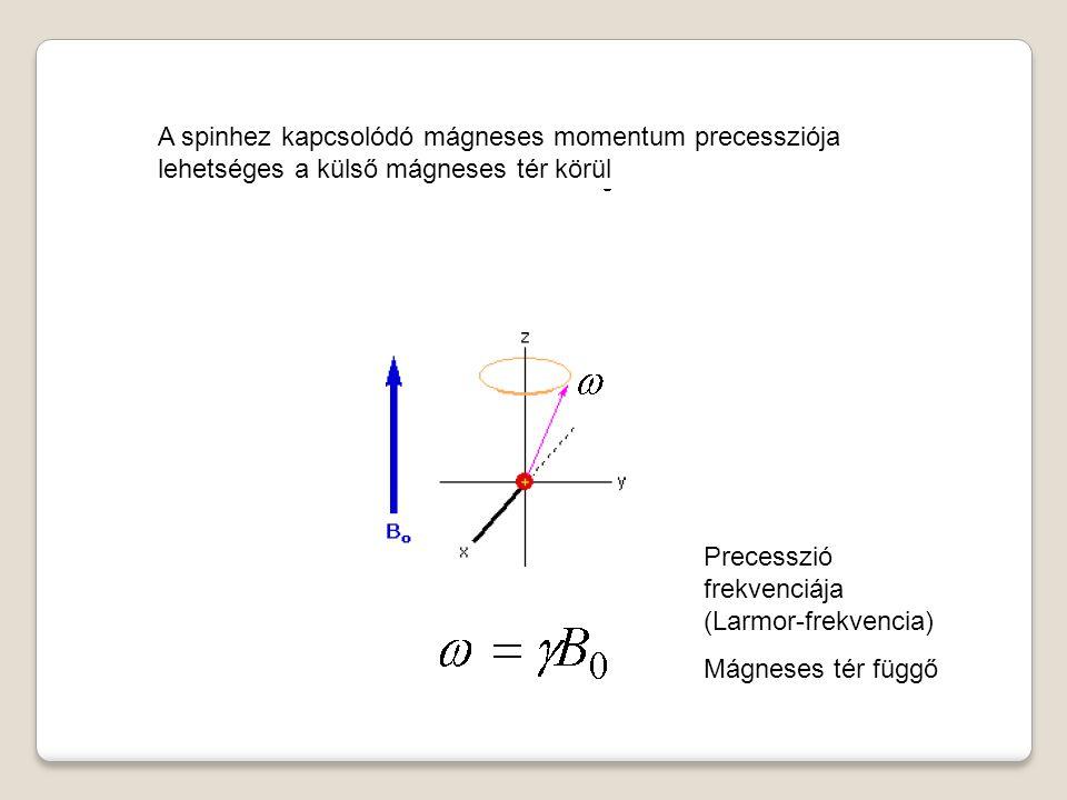 A spinhez kapcsolódó mágneses momentum precessziója lehetséges a külső mágneses tér körül Precesszió frekvenciája (Larmor-frekvencia) Mágneses tér függő