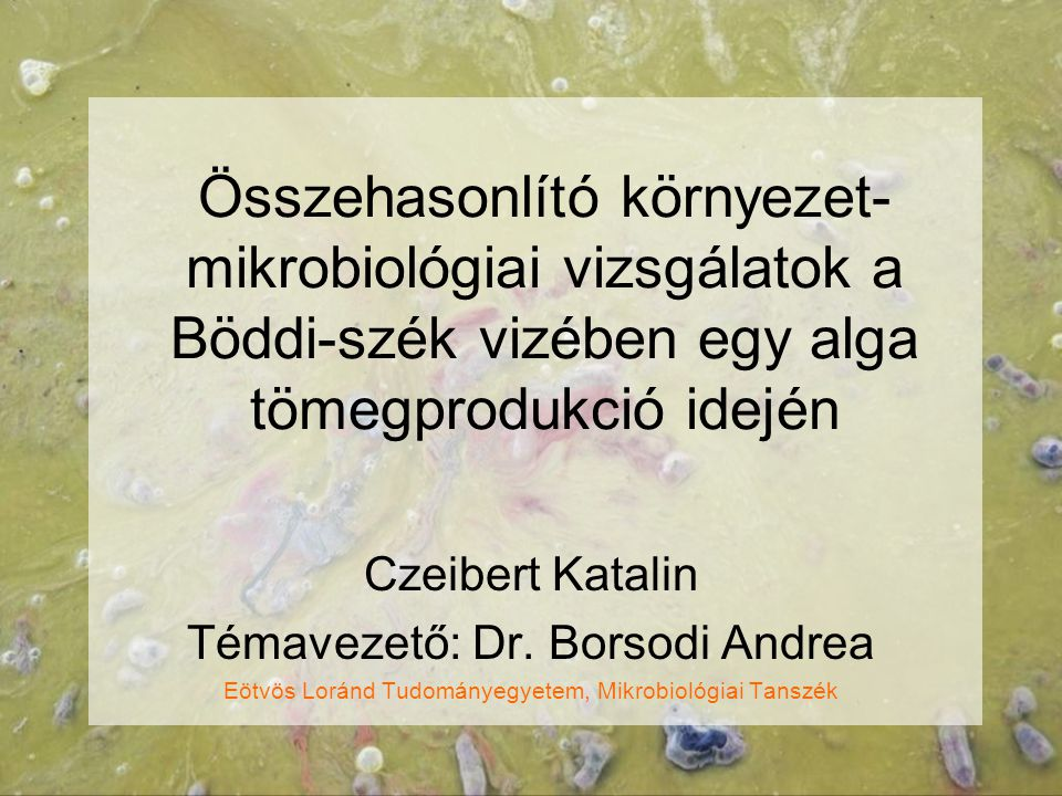 Összehasonlító környezet- mikrobiológiai vizsgálatok a Böddi-szék vizében egy alga tömegprodukció idején Czeibert Katalin Témavezető: Dr. Borsodi Andr
