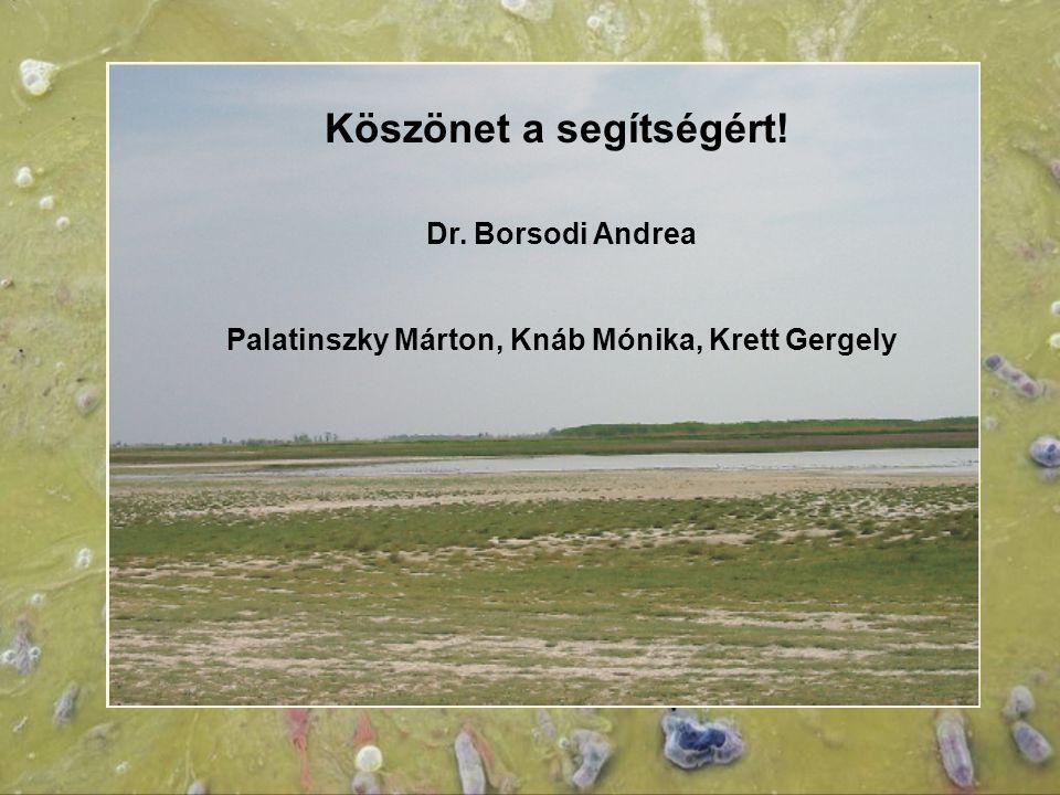 Köszönet a segítségért! Dr. Borsodi Andrea Palatinszky Márton, Knáb Mónika, Krett Gergely